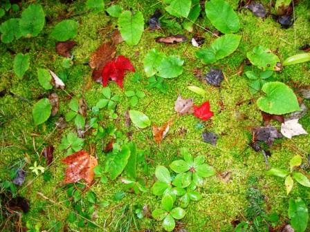 Fall Colors on Moss