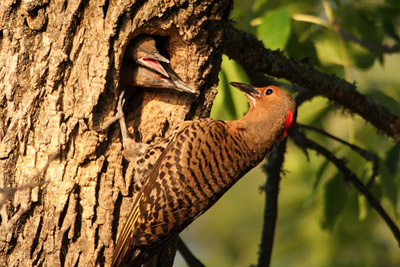 Flickers by Dave Hoyt